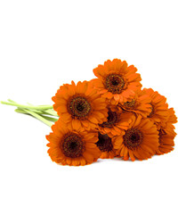 Orange Gerberas. Ukraine