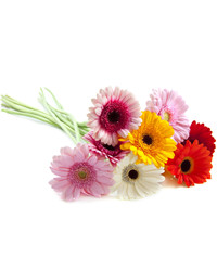 Mixed Color Gerberas. Ukraine