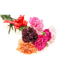 Mixed Color Carnations. Ukraine